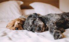 8 PÕHJUST: Kas lemmikloomaga voodi jagamine on hea idee?