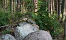 Kui riigikassas raha napib, jäävad kesisemaks ka erametsade korrashoiuks eraldatavad summad. Pildil Merit Kvatši metsa rajatud kiviaed.