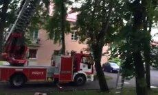 FOTOD ja VIDEO: Päästjad tõid Põhja-Tallinnas kolm päeva puu otsas redutanud kassi alla