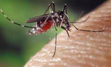 Miks on sääsed siiski kasulikud putukad ja nende hävitamine ei ole kahjuks hea idee?
