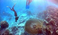 ВИДЕО: У Большого Барьерного рифа появился конкурент