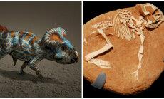 Dinosauruste kadumisele leiti uus võimalik põhjendus - liiga pikk munas veedetud aeg