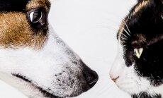 Kas kassid ja koerad hingepõhjas tõepoolest vihkavad üksteist?