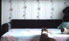 Humoorikas VIDEO: Hindamatu reaktsioon! Mis hakkab juhtuma siis, kui koeraomanik kodust lahkub ja peidukaamera tööle jätab