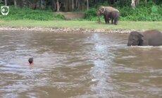 Hämmastav VIDEO: Elevant näeb vees hädas olevat meest ja kiirustab appi