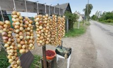 Rae vald läheb taas Peipsiääre sibulakasvatajatelt sibulaid ostma