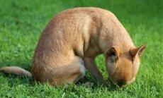 Miks koerad rohtu näksivad ja kas see võib neile hoopiski kahjulikuks osutuda?