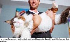 Maailma suurim kass valitseb New Yorki