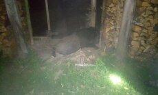 PÄEVAPILT: Peremees astus kuuriukse ette surnud metsseale pimedas otsa