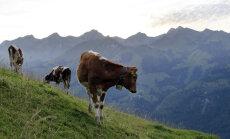 Prantsusmaa põllumehi on tabanud enesetappude laine