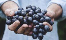 Ettevaatust! Puuviljad on küll maitsvad ja magusad, aga kas ka tervislikud?