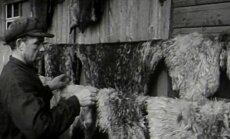 VANAD VIDEOKAADRID AASTAST 1948: Operaator koos Kihnu hülgeküttidega jahiretkel!
