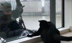 Humoorikas VIDEO: Sellel aknapesijal on ühe kassiga väga eriline suhe