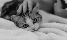 Kuidas on õige kassile läheneda? Õiged ja valed viisid kassi tervitamiseks