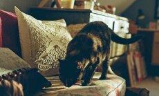 PÕNEV: Millest tuleb kassidel komme meelega asju ümber ajada?