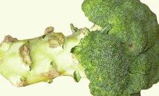 Brokoli on ametlikult maailma kõige tervislikum köögivili: millist pead osta ja kuidas tarvitada?