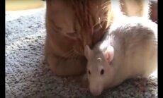 Ebatavalised semud: lugu roti ja kassi sõprusest, mis teeb südame soojaks