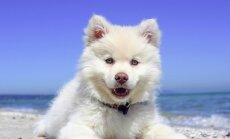 5 olulist fakti: kui hästi Sina koeri tunned?