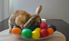 8 любопытных фактов о яйцах