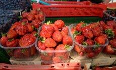 Maasikamüüja: nii hullu aastat ei ole kahekümne aasta jooksul olnud!