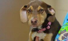 Südamlik lugu: väärkoheldud koer päästis põllult külmunud tüdruku, mis sai edasi