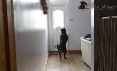 Uskumatu lugu: teadvuseta mehe elu päästis koer, kes oskab kavalalt uksi avada