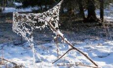 Leili metsalood: talve ilusnukrad hetked