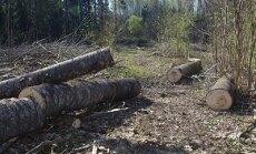 Looduskaitsekuu jõhker avapauk: metsalangetaja lõhkus Eestimaa lõunatipu loodusraja