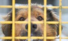 Viljandi vallas tehti loomade varjupaigale pommiähvardus