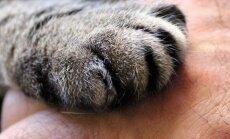 Ametnikud ja loomakaitsjad otsustasid loomade parema abistamise nimel tihendada koostööd