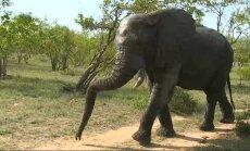 Сафари-тур не выходя из дома: дикую природу Африки показывают в реальном времени