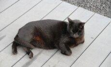 ФОТО читателя Delfi: Счастливые кошки Фуэртевентуры