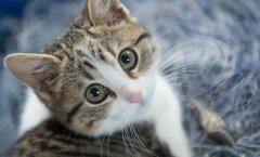 TEST: Millise kassiga sa oma iseloomult kõige rohkem sarnaned?