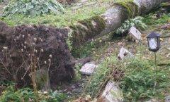 FOTOD: Tormituul lükkas kalmistul suure puu kalmudele pikali