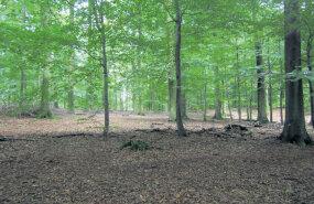 Metsaomaniku ökokonto ja metsakalmistud