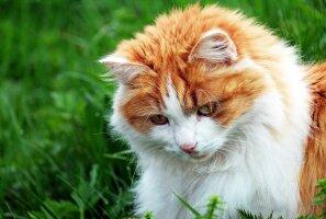 Kas osta oma kassile toamuru? Viis põhjust, miks kassid rohuliblesid näksivad