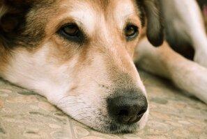PÕNEV: Miks koerad mõnikord aastaid omanike haudadel leinavad?