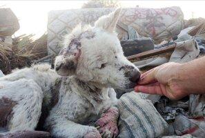 Südamlikud enne ja pärast fotod päästetud loomadest näitavad, mida armastus teha suudab