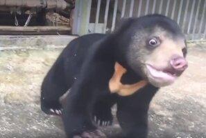 Liigutav VIDEO: Need vangistuses elanud loomad näevad ja tunnevad elus esimest korda, mida tähendab vabadus