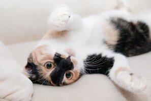 TEST: Kas me suudame vaid 6 küsimusega ära arvata, mis lemmikloom sul kodus on?