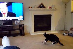 Humoorikas VIDEO: Kass, kes kardab Donald Trumpi