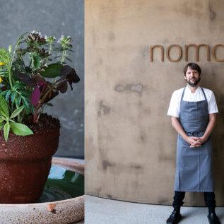 Maailma üks kuulsamaid restorane Noma pakub taas ikoonilist lillepotimagustoitu