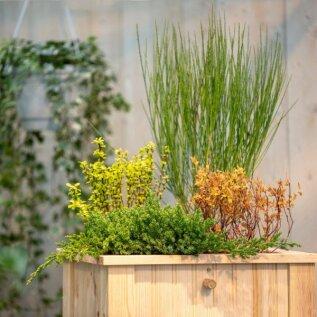 MEISTRIKOOL | Lillekast, kus saab ka asju hoida