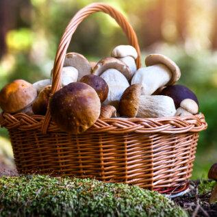 10 levinud viga, mida tuleb seente ostmisel, säilitamisel ja tarbimisel igal juhul vältida