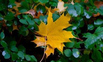 Kollane rohelisel