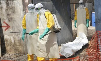 ВОЗ предсказала распространение вируса Зика в Европе этим летом
