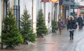 ФОТО DELFI: Старый город украсили множеством рождественских елок