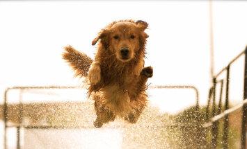 Huvitavad faktid: miks koerte käpad lõhnavad nagu maisikrõpsud?