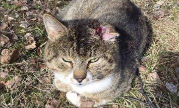 Mis on saanud abivajavast küljest rebitud kõrvaga kassist?
