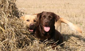 Esimest korda koeraomanikuks? 11 koeratõugu, kelle kasvatamisega isegi algaja hakkama saab